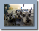 Tinkerbell, Bubba, Sparky